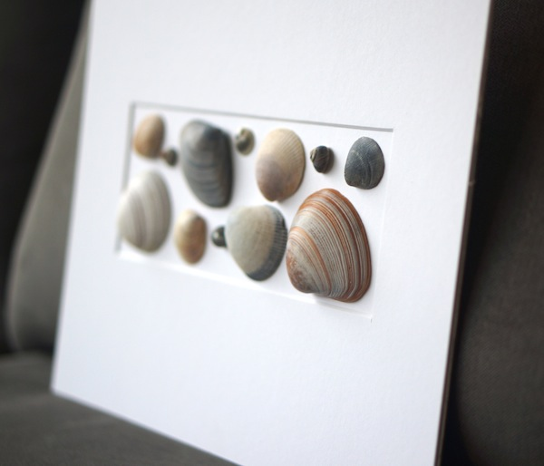 shells_angled