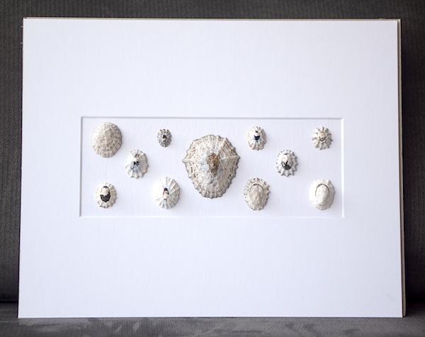 shells_grey