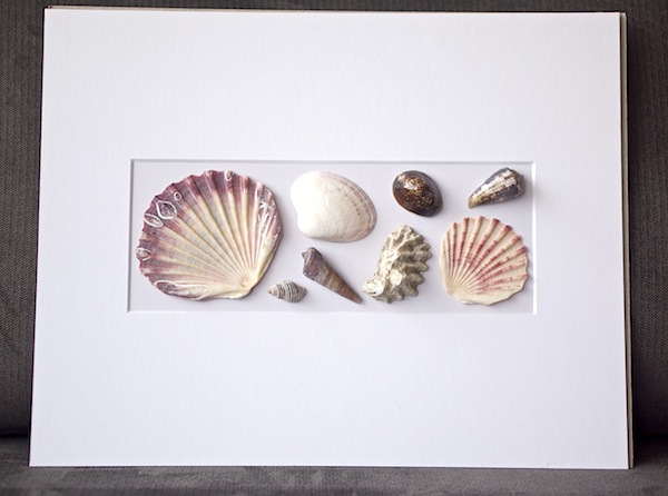 shells_pinks