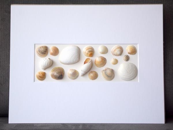 shells_yellow